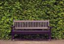 Grün statt Holz: Schmale Hecken für kleine Gärten